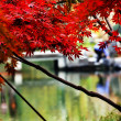 Stock Photo: Maple Leaves Bridge West Lake Hangzhou Zhejiang China