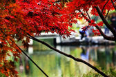 Maple Leaves Bridge West Lake Hangzhou Zhejiang China — Stock Photo