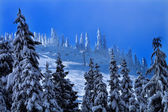 Sking telesillas nevado árboles en snoqualme pasan washington — Foto de Stock