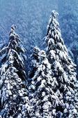 Coperta di neve astratta di alberi sempreverdi a snoqualme pass washingt — Foto Stock