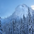 Snow Covered Evergreens Forest Snow Mountain Peak Snoqualme Pass — Stock Photo #23924303