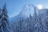 Snow Covered Evergreens Forest Snow Mountain Peak Snoqualme Pass — Stock Photo
