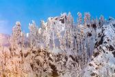 Snow Covered Trees High Snow Mountain Peak Snoqualme Pass Washin — Stock Photo