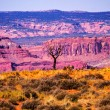 Stock Photo: Dead Tree Yellow Grass Lands Moab Fault Arches National Park Moa