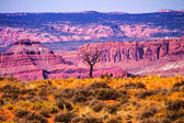 Dead Tree Yellow Grass Lands Moab Fault Arches National Park Moa — Stock Photo