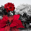 Poinsettia and Holly — Stock Photo