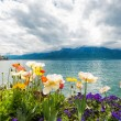 Flowers near lake, Montreux. Switzerland - Stockfoto