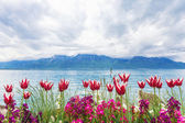 Flowers near lake, Montreux. Switzerland — Stock Photo
