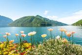 Flowers near lake with swans, Lugano, Switzerland — Stock Photo