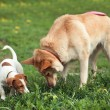 Two dogs — Stock Photo #20086531
