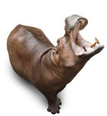 Hippopotamus on white — Stock Photo
