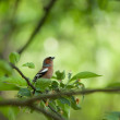Small birdie on branch surrounded with foliage — Stock Photo #21663769