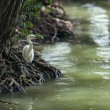 The heron - Stock Photo