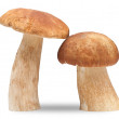 Two cep - Stock Photo
