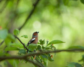 Small birdie on a branch surrounded with foliage — Stockfoto