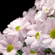 Bouquet of pink chrysanthemums — Stock Photo #24924089