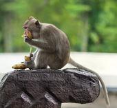 обезьяны сидят на камне — Стоковое фото