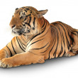 Tiger has a rest — Stock Photo