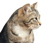 Cat is isolated — Stock Photo
