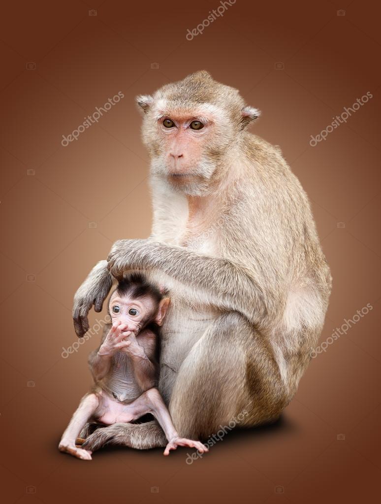 两个猴子 — 图库照片08coffeemill#42235553