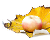 Apple on autumn leaf isolated — Stock Photo