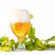 Hop cones with beer isolated on white — Stock Photo #23528407