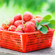 Strawberry in red bowl — Stock Photo