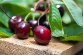 Fresh cherries on wooden board — Stock Photo