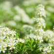 Small flowers and leaves — Stock Photo #35250749