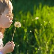 Girl blowing on a dandelion — Stock Photo