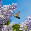The butterfly collects nectar — Stock Photo