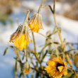 Stock Photo: Yellow frozen flower