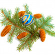 Branch of coniferous tree with glass ball — Stock Photo
