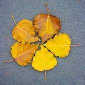 Five autumn leaves — Stock Photo