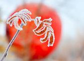 Feuilles congelées — Photo