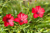 Vibrant flower — Stock Photo