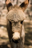 Cute donkey — Stock Photo