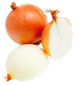 Onions on white — Stock Photo