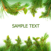 Pine branches as frame — Stock Photo