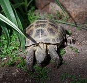 Feeding tortoise — Stockfoto