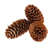 Small group of cones — Stock Photo
