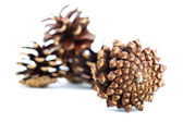 Small group of cones — Foto Stock