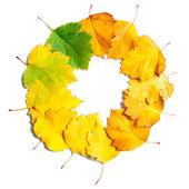 Rama z liści jesienią — Zdjęcie stockowe