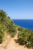 Desert path with palm tree in Sicily Italy — Stockfoto