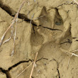 Hound footprint — Stock Photo