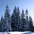 Winter forest — Stock Photo #12713819