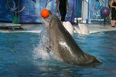 Dolphin entertainment — Stock Photo