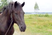 Old sorrowful horse — Stock Photo