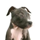 小小狗 — 图库照片