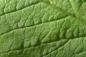 Surface of a leaf — Stock Photo
